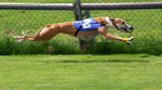 Greyhound racing: Interesting facts you may not know