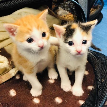Cats treated at RSPCA Putney Animal Hospital
