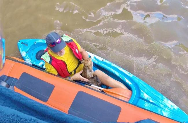 Waterlogged fox with kayaker, source RNLI