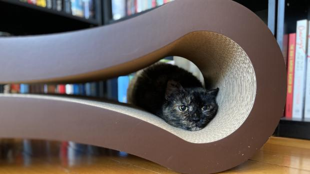 Wandsworth Times: Shadow loves every part of the PetFusion lounger. Credit: Reviewed / Kate Tully Ellsworth