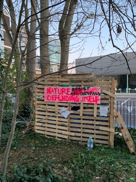 Protesters are occupying York Gardens in Battersea again to stop trees being felled.