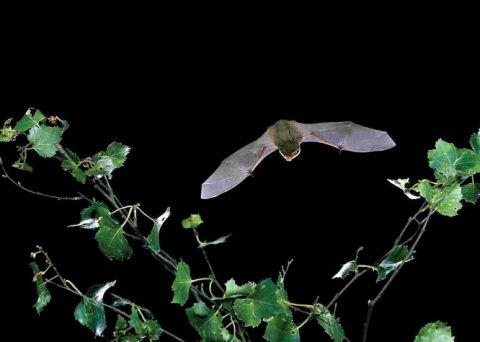Bat walk on Elmbridge's radar