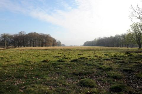 Serene: Richmond Park holds many species of wildlife