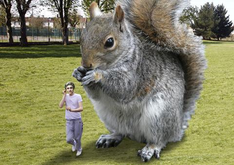 One Direction star, Niall Horan, was attacked by a squirrel in Battersea Park in 2012