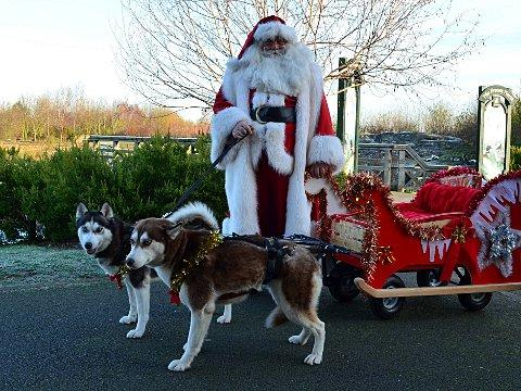 Children can meet huskies and Santa at London Wetland Centre