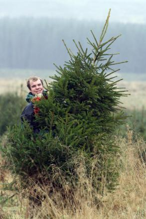How to recycle your Christmas tree for free