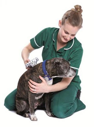 Battersea Dogs' Home have backed the compulsory microchipping of dogs
