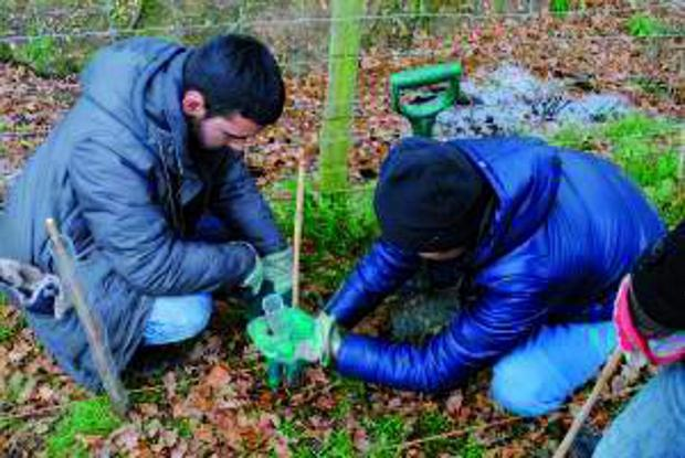 Wandsworth Guardian: Young Muslims planting trees last year