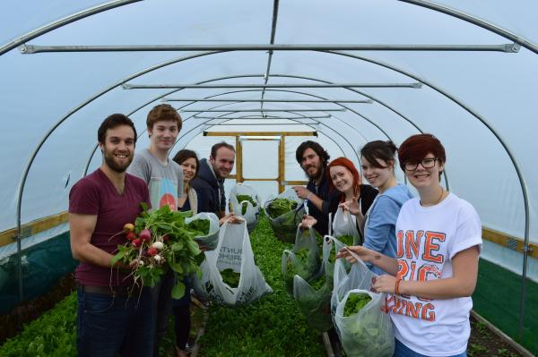 Volunteers harvest organic produce on campus