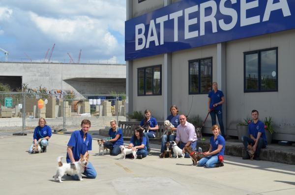 Rescue dogs: Lots of Battersea Terriers are looking for homes