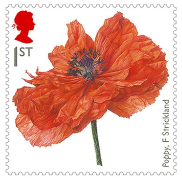 Poppy - by Fiona Strickland, who is considered among the leading contemporary botanical artists