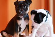 VIDEO: Adorable orphaned puppies were the victims of backstreet breeding, Battersea warns