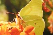 Nature Notes: Butterfly bonanza