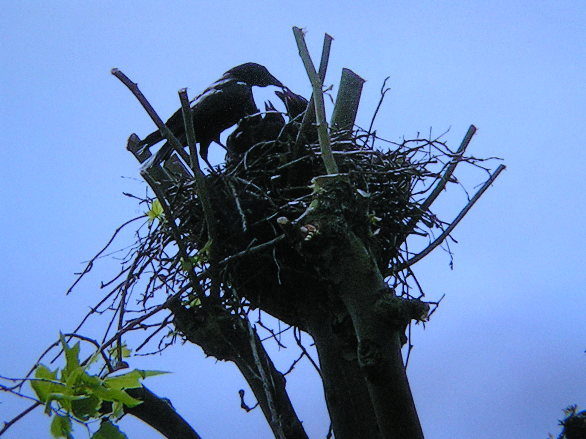 Tony Drakeford's picture of the chicks in  the nest