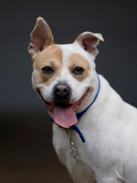 Battersea Dogs Cats Homes Quirkiest And Most Popular Dog Names Unveiled
