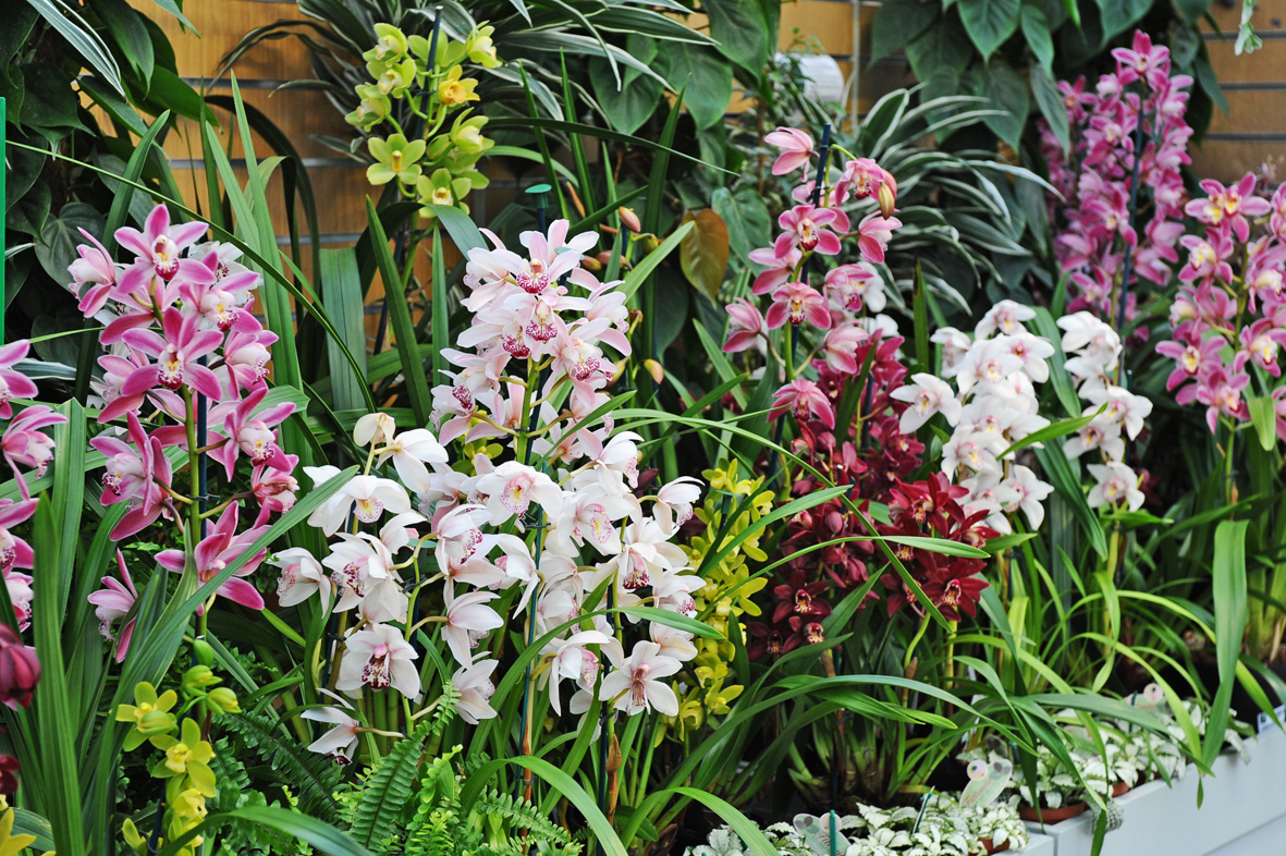 Orchids in the Glasshouse