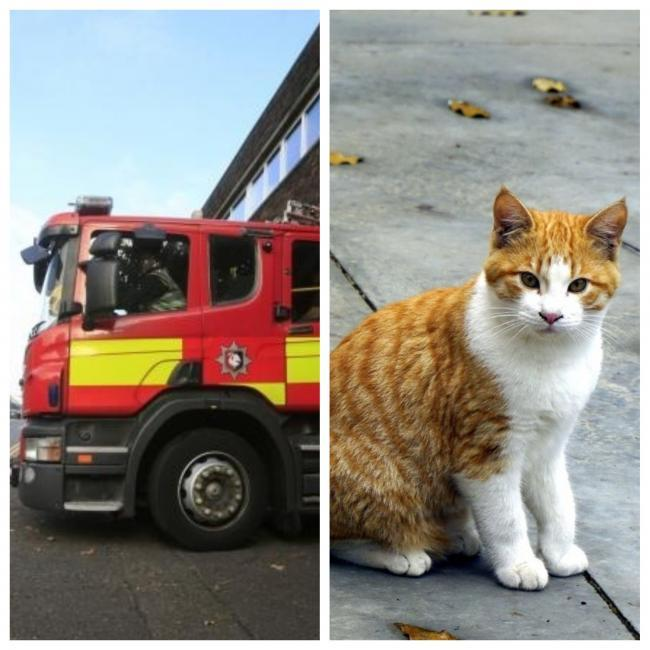 Hundreds of pets rescued by fire services every year