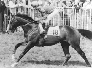 Wandsworth Guardian: MISSING: Shergar was kidnapped in 1983